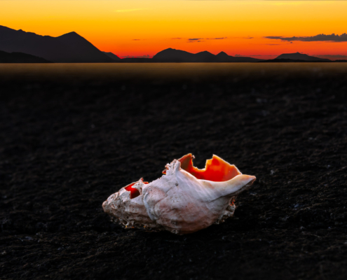Broken dreams - artwork by selmer.as - A broken conch in sunset